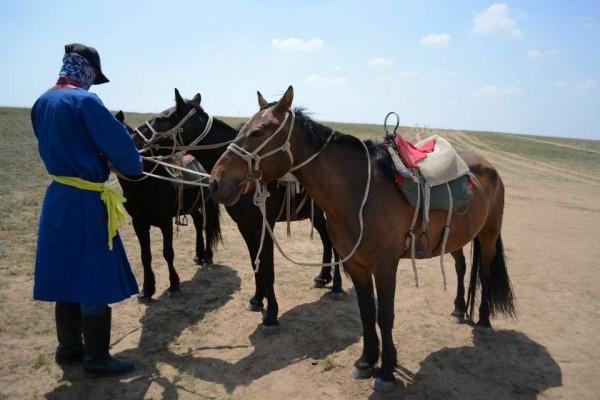 XLMR Horse