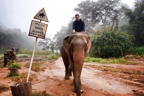 Elephant Camp Activity: Mahout Training
