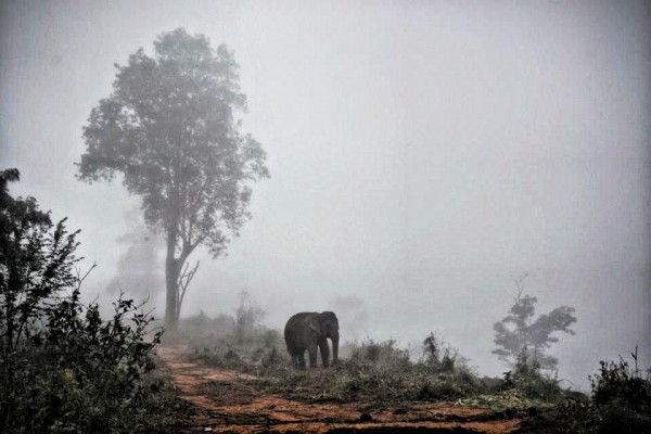 """The elephants are spread out on the hills, and allocated areas for them to """"just be an elephant"""" and rest in the evening till dawn."""