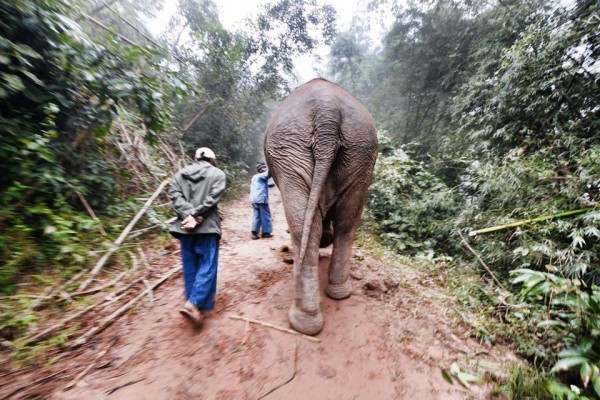 Heading up the hills to fetch the other elephants.