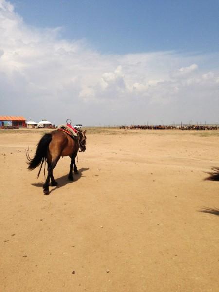 XLMR Horse 2