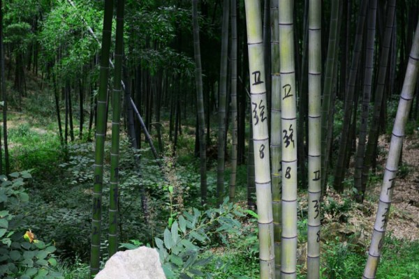 Bamboo Forest4