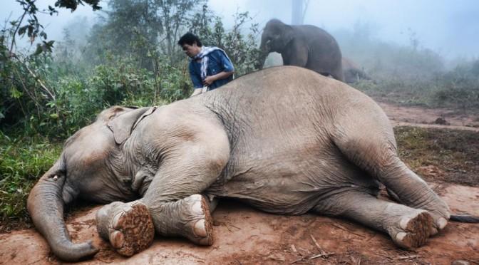 Chiang Rai: Elephant Camp